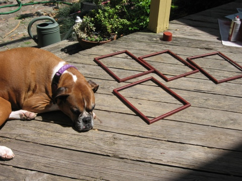 Ella is guarding the frames as they dry in the sun.