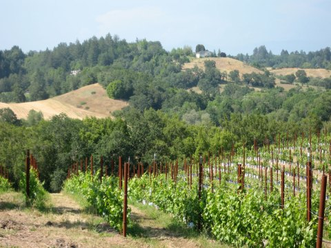 View from the Iron Horse Vineyard - I was really captured by this landscape...