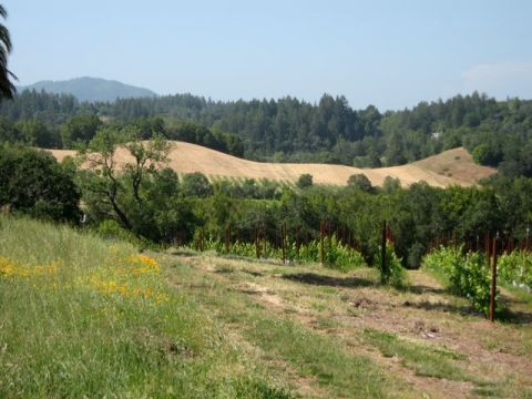 One more beautiful view from Iron Horse Vineyard