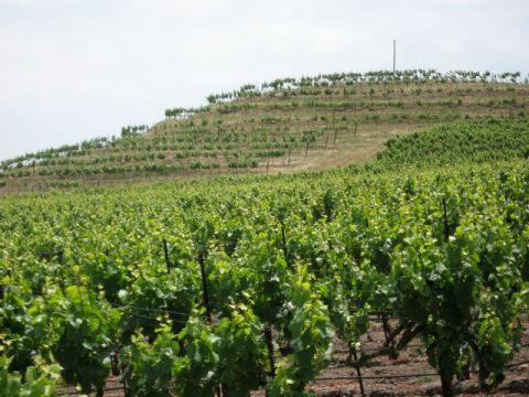 A terraced vineyard (very rare)
